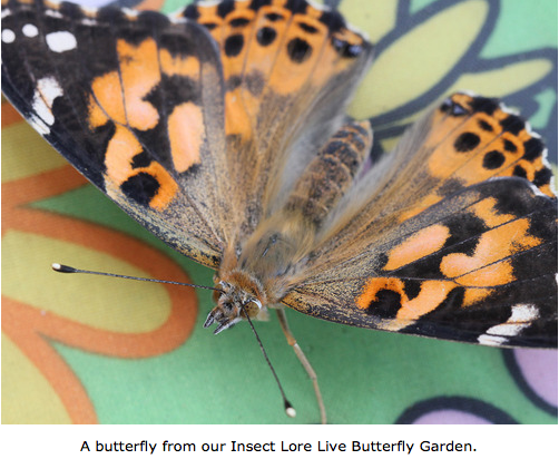 15 comments - Live Butterfly Garden
