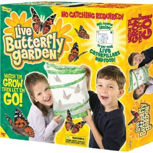 butterfly Amazon: Live Butterfly Garden only $10.99 (Reg $24.99)