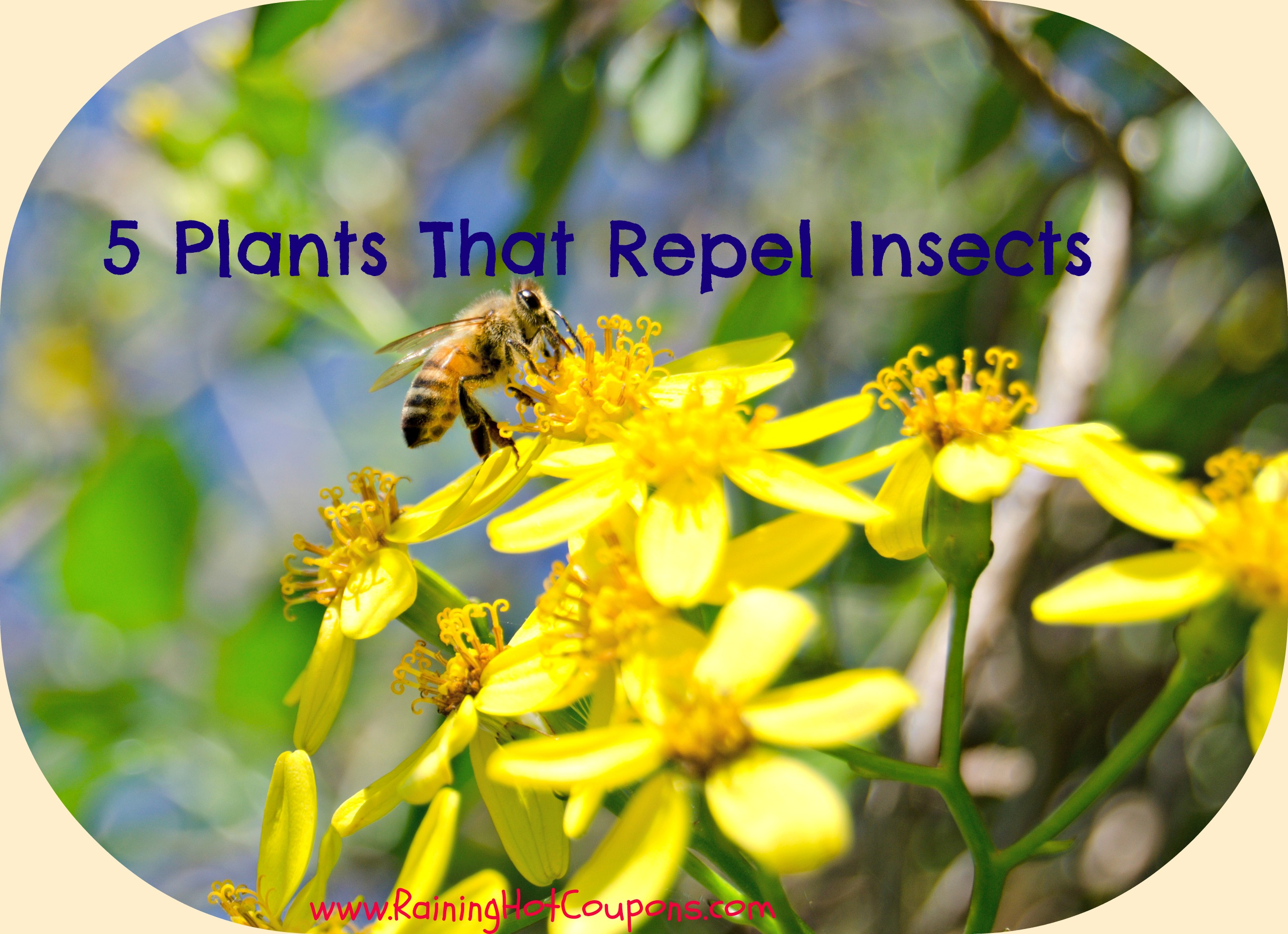 5 plants that repel insects. Black Bedroom Furniture Sets. Home Design Ideas