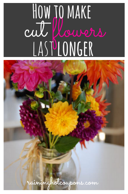 how to make cut gladiolus last longer