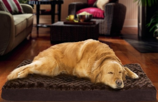 Furhaven Orthopedic Pet Mattress ONLY $16.99 (Reg. $49.99)! 3 Sizes to Choose From!