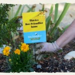 FREE Packet of Organic Native Bee Friendlier Wildflower Seeds from Cascadian Farms!