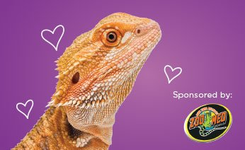 FREE Reptile Rally at Petco! July 21 & 22 Only!